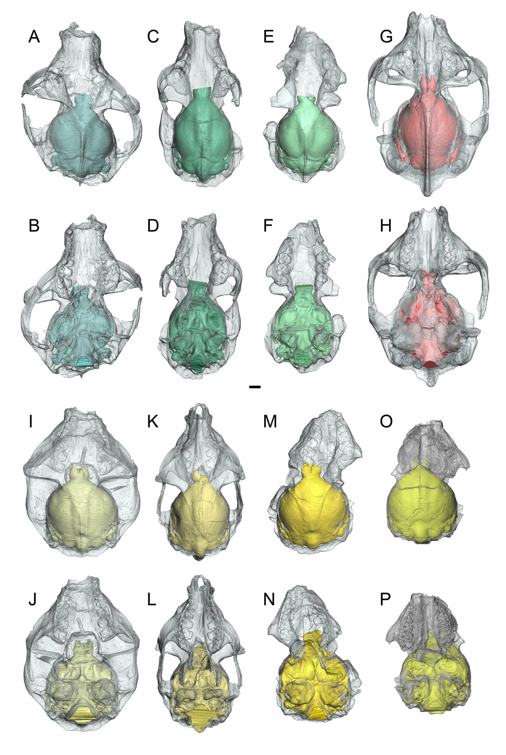 evolution primate intelligence Discuss the changes which occured in intelligence through primate evolution intelligence is correlated with brain size, gestation period, social organization, and mating patterns.