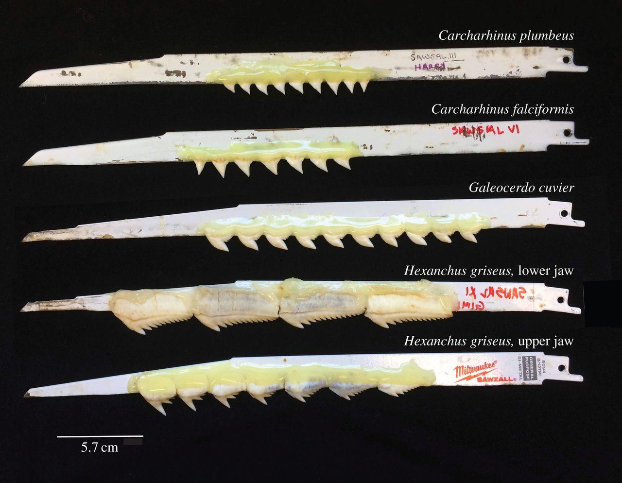 How Do Shark Teeth Bite Reciprocating Saw Glue Provide