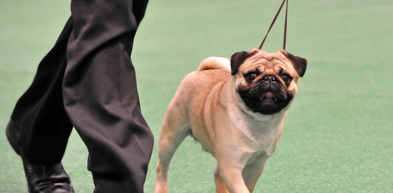 Sperm regeneration in dogs