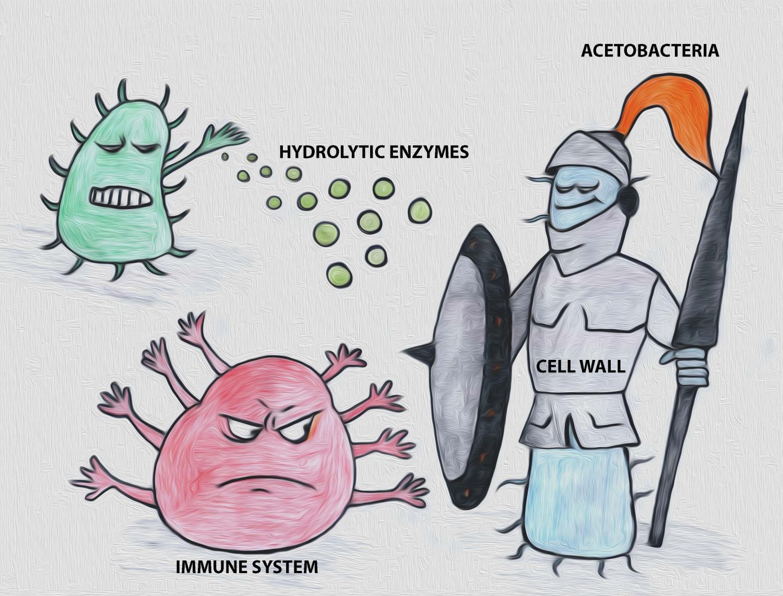 how to draw cartoon bacteria