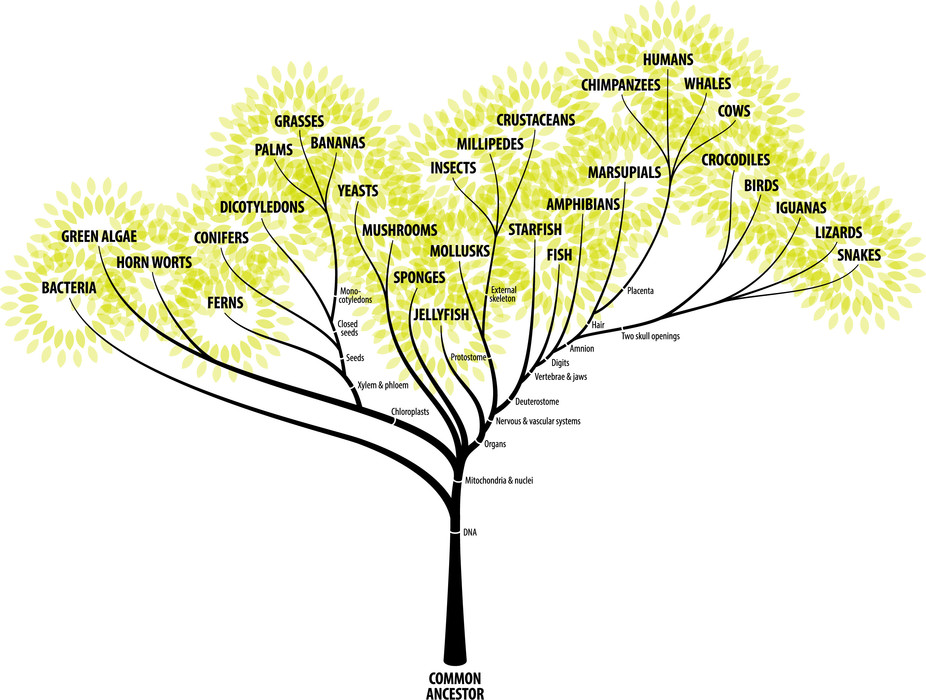 tree of life in evolution a discussion 2014-4-30 carl woese pioneered the use of gene sequencing, discovered a third domain of life, and upended an entire field but it would be.