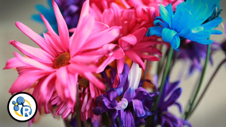 video how to make cut flowers last longer. Black Bedroom Furniture Sets. Home Design Ideas