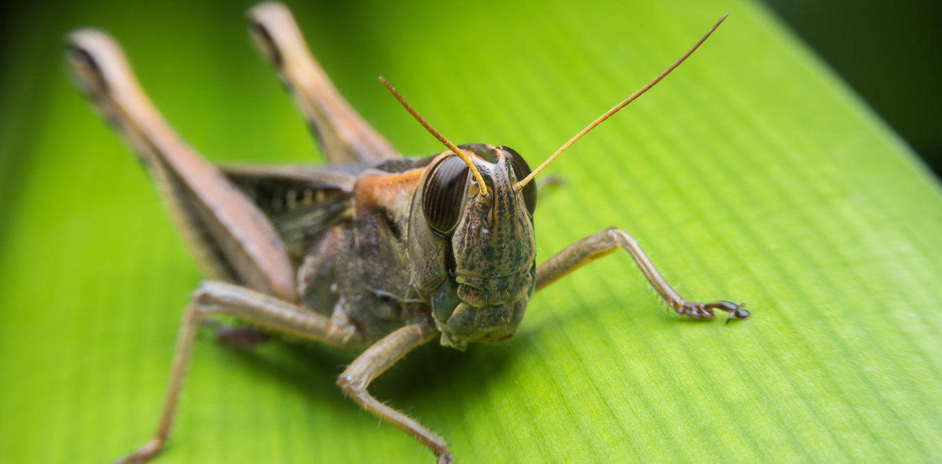 U N Insects Insects are helping us...