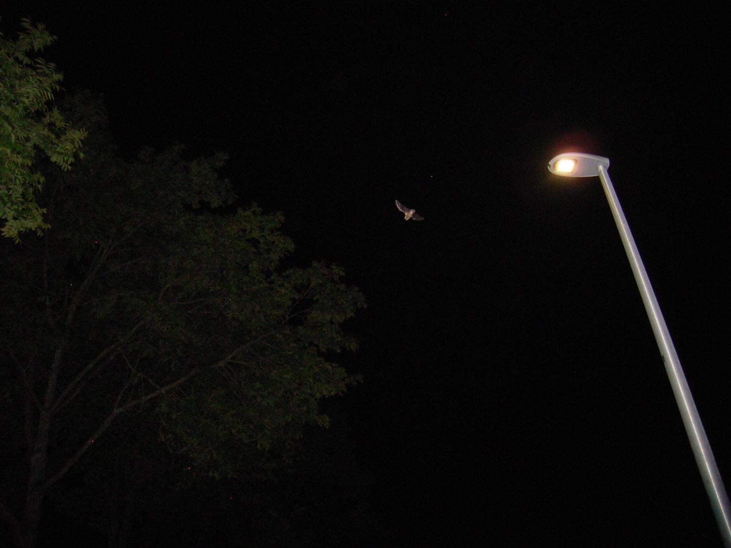 Led Lighting Influences The Activity Of Bats