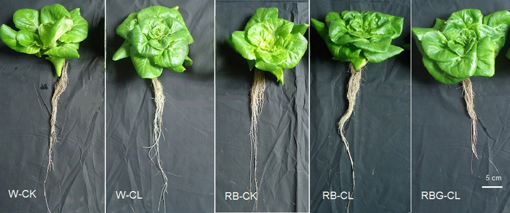 Led Treatments Enhance Lettuce Phytochemicals Antioxidants