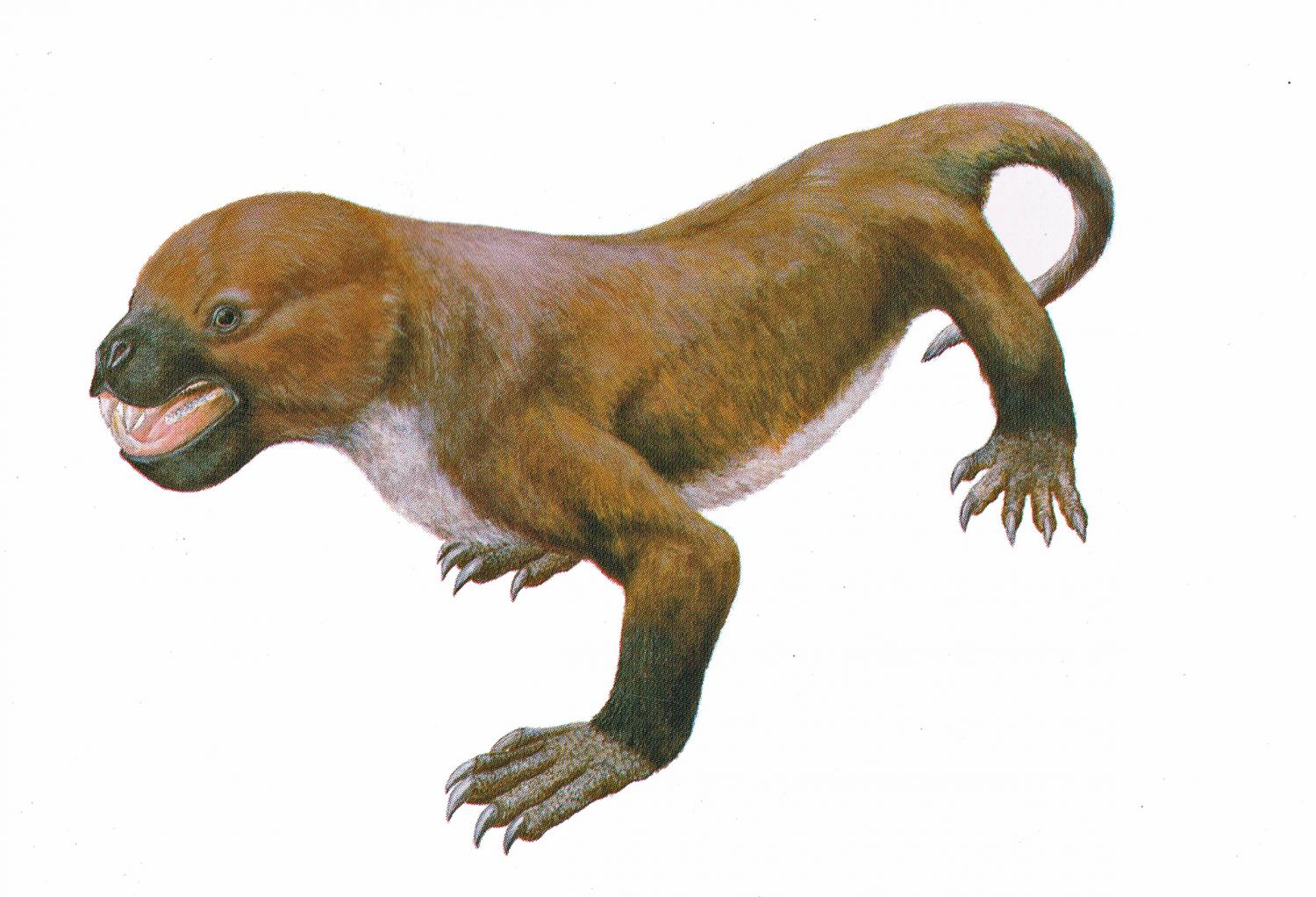 mammal like reptile survived much longer than thought