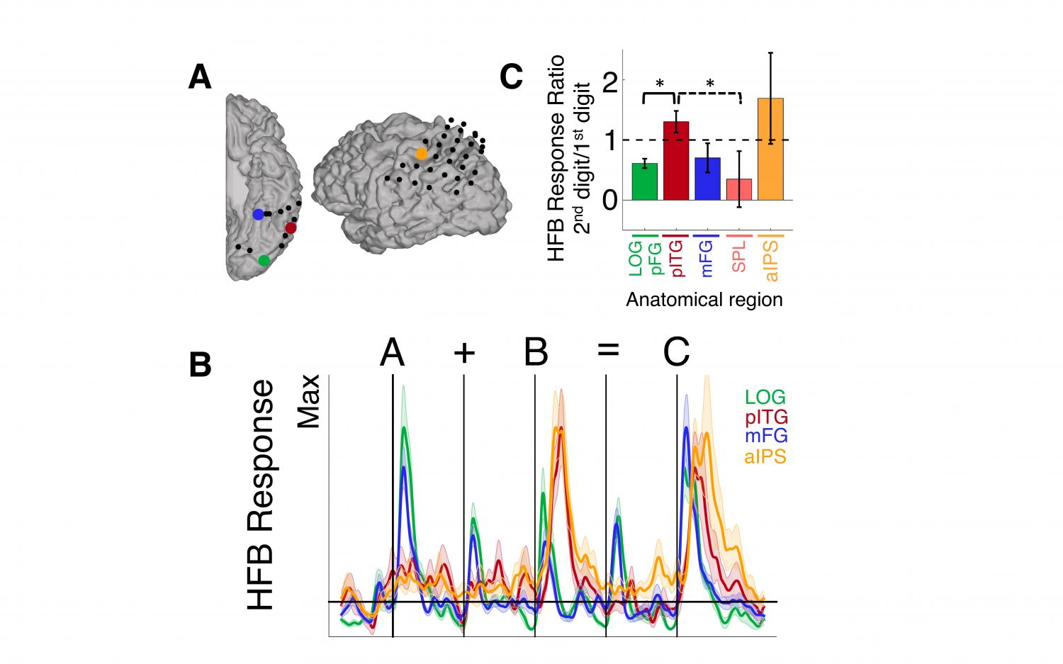 Your brain on math: Functional coupling between neural regions ...