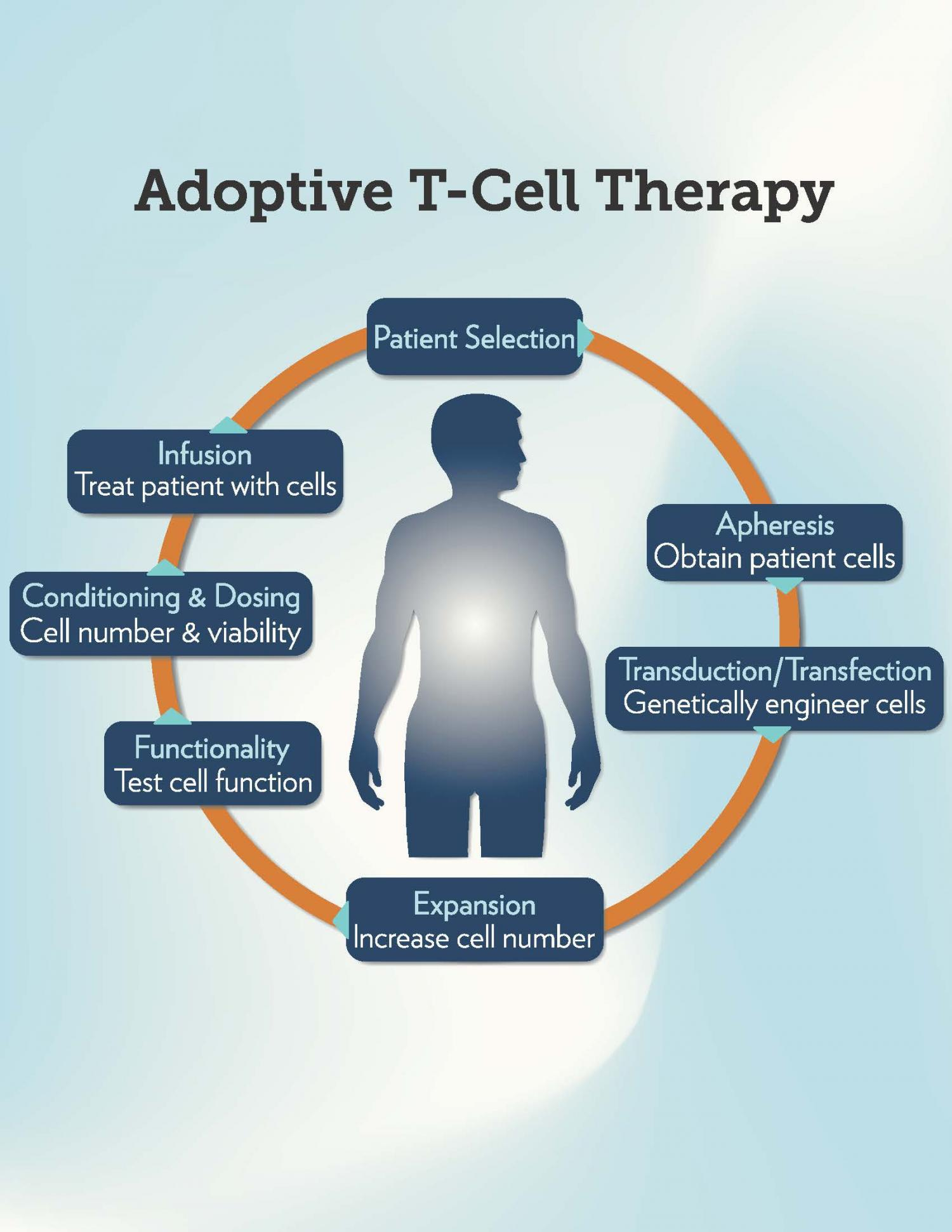 N acetyl cysteine improves efficacy of adoptive T cell