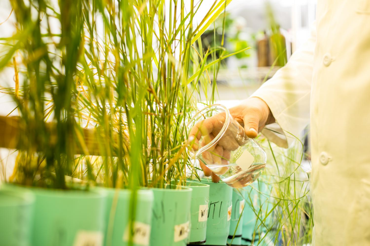 New grasses neutralize toxic pollution from bombs for Pollution fighting plants