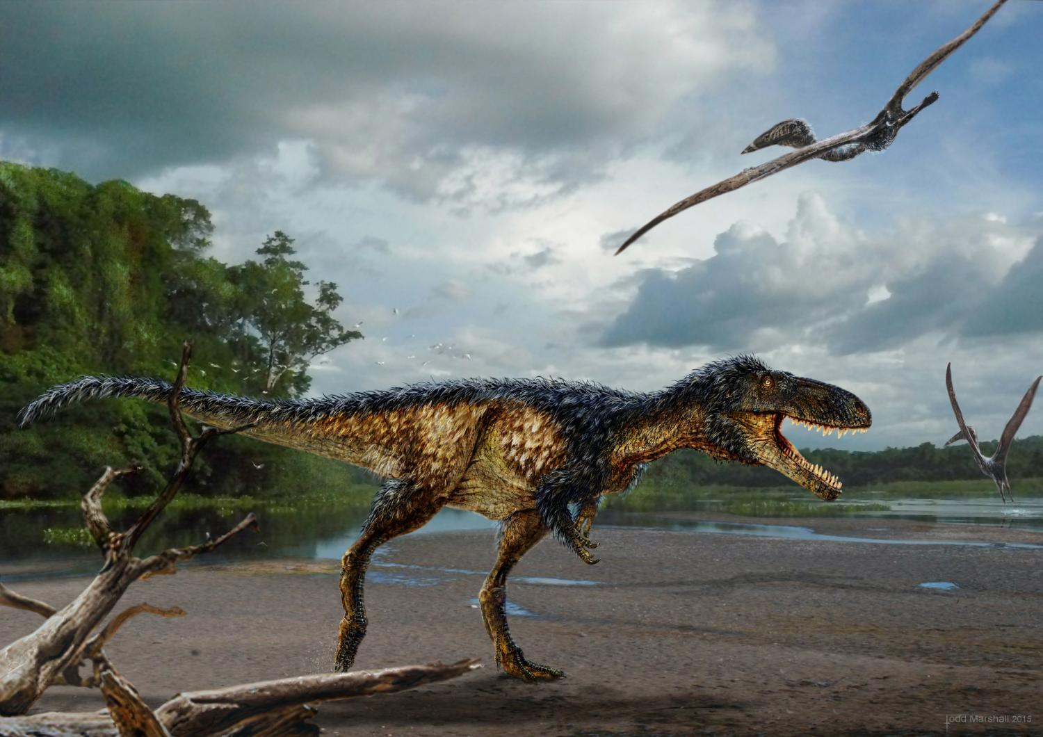 The Presence Of Feathers Alone Is Not Enough Evidence To Conclude That Birds Evolved From Dinosaurs However Some Distinct Skeletal Characteristics Suggest
