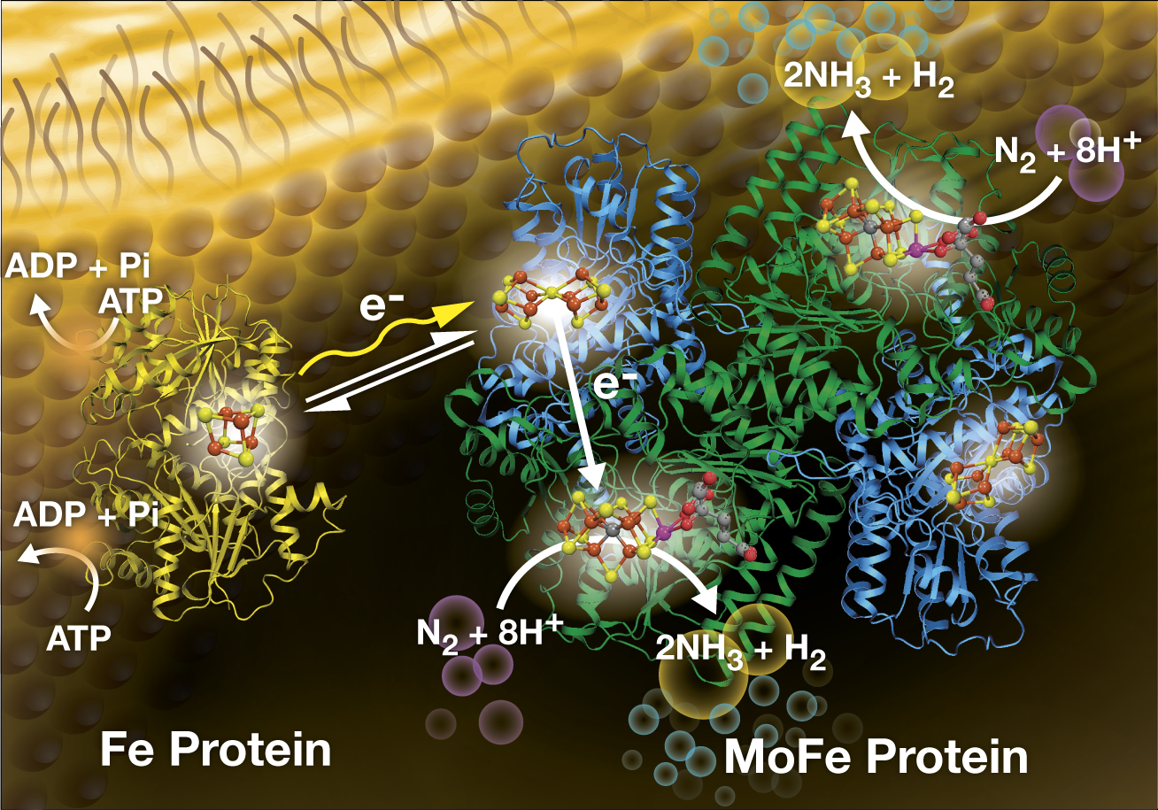 Light Driven Dinitrogen Reduction Scientists Shed New