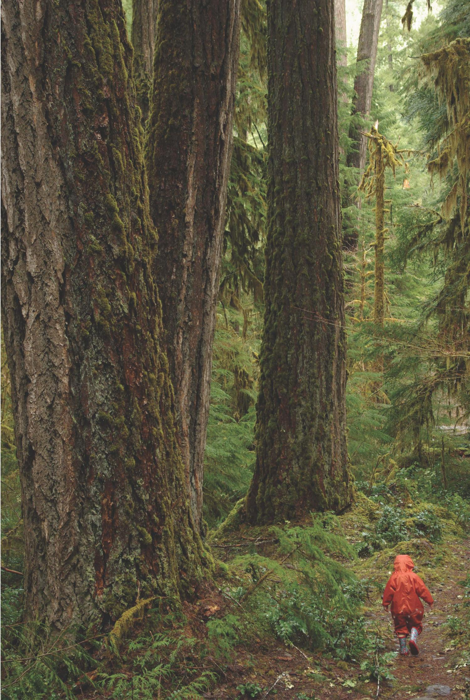 These Old Growth Forests In The Cascades May Exceed 500 Years Credit Matt Betts