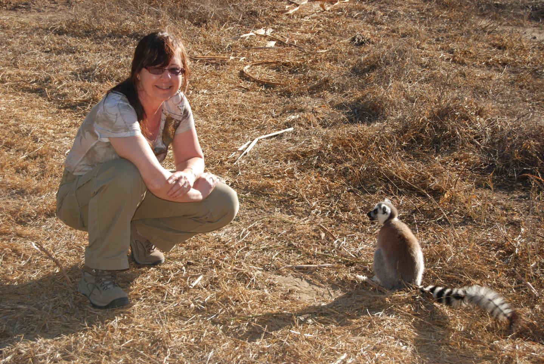 ring tailed lemurs going going gone