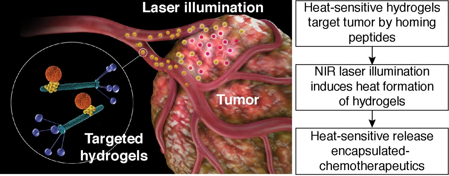 photothermal cancer therapy essay Currently a popular area in nanomedicine is the implementation of plasmonic gold nanoparticles for cancer diagnosis and photothermal therapy, attributed to the.