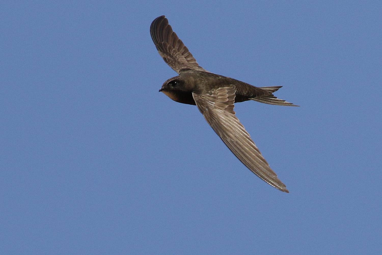 Bird Data Logger : Ten months in the air without landing
