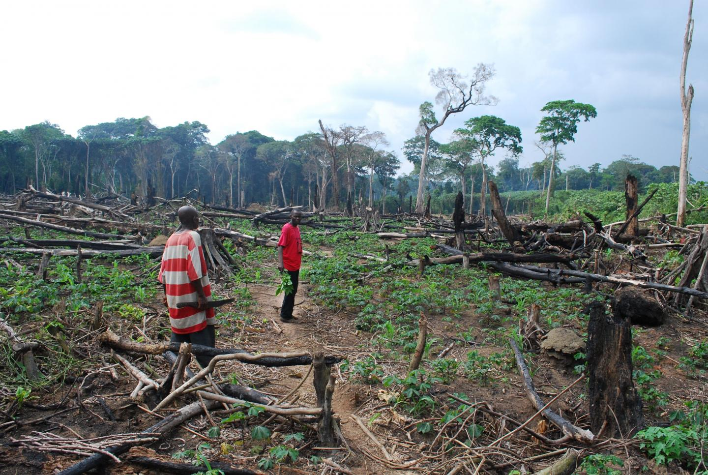 the fight against deforestation why are congolese farmers clearing