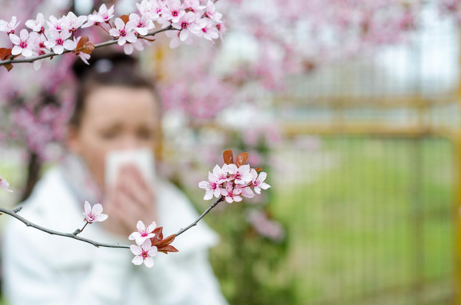 Tips for surviving this springs allergy season mightylinksfo