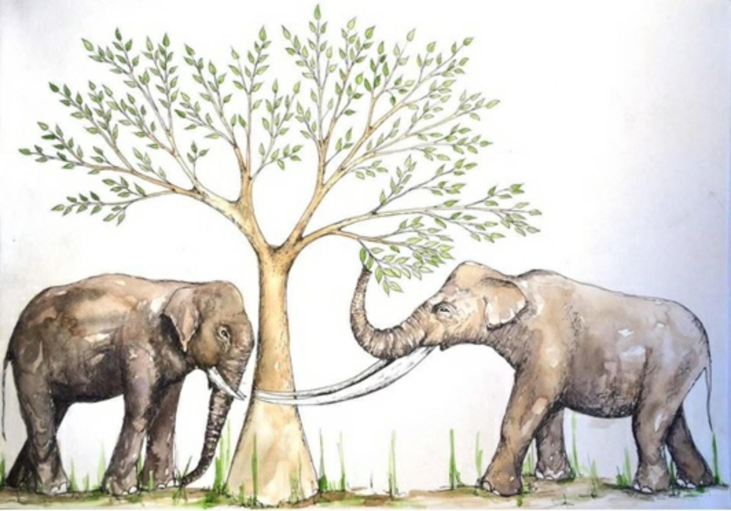 tooth wear sheds light on the feeding habits of ancient elephant