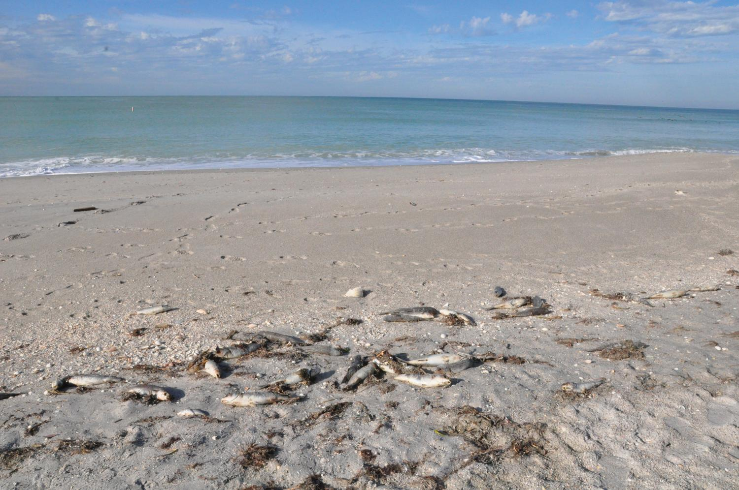 Researchers Expect No Major Red Tide Outbreaks On Florida