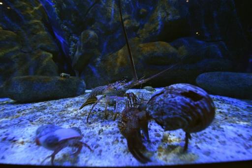 Rio takes dive into South America's biggest aquarium