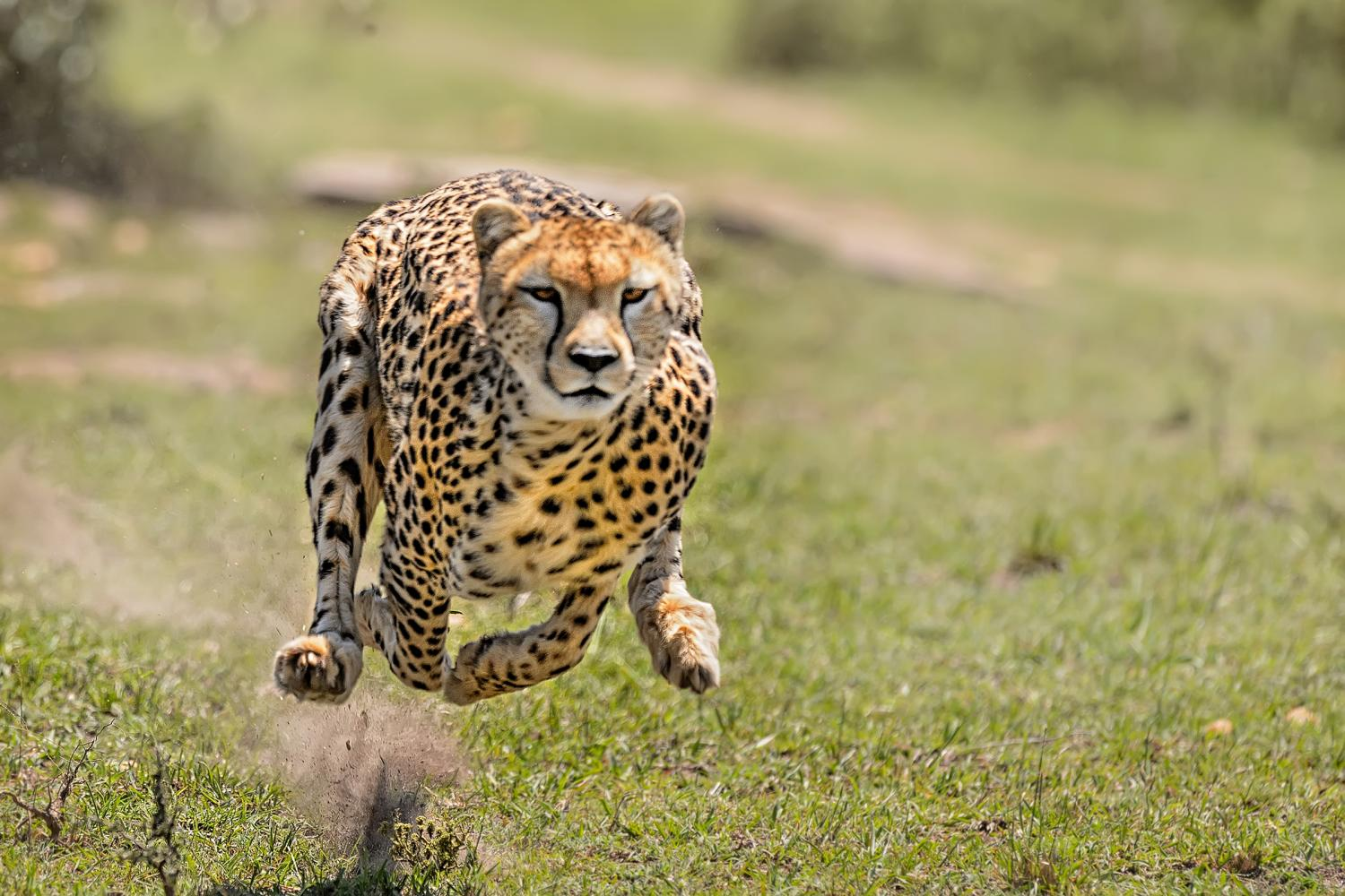 Wild animals: a selection of news