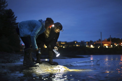 Us government clamps down on eel poaching as value grows for Maine fishing laws 2017