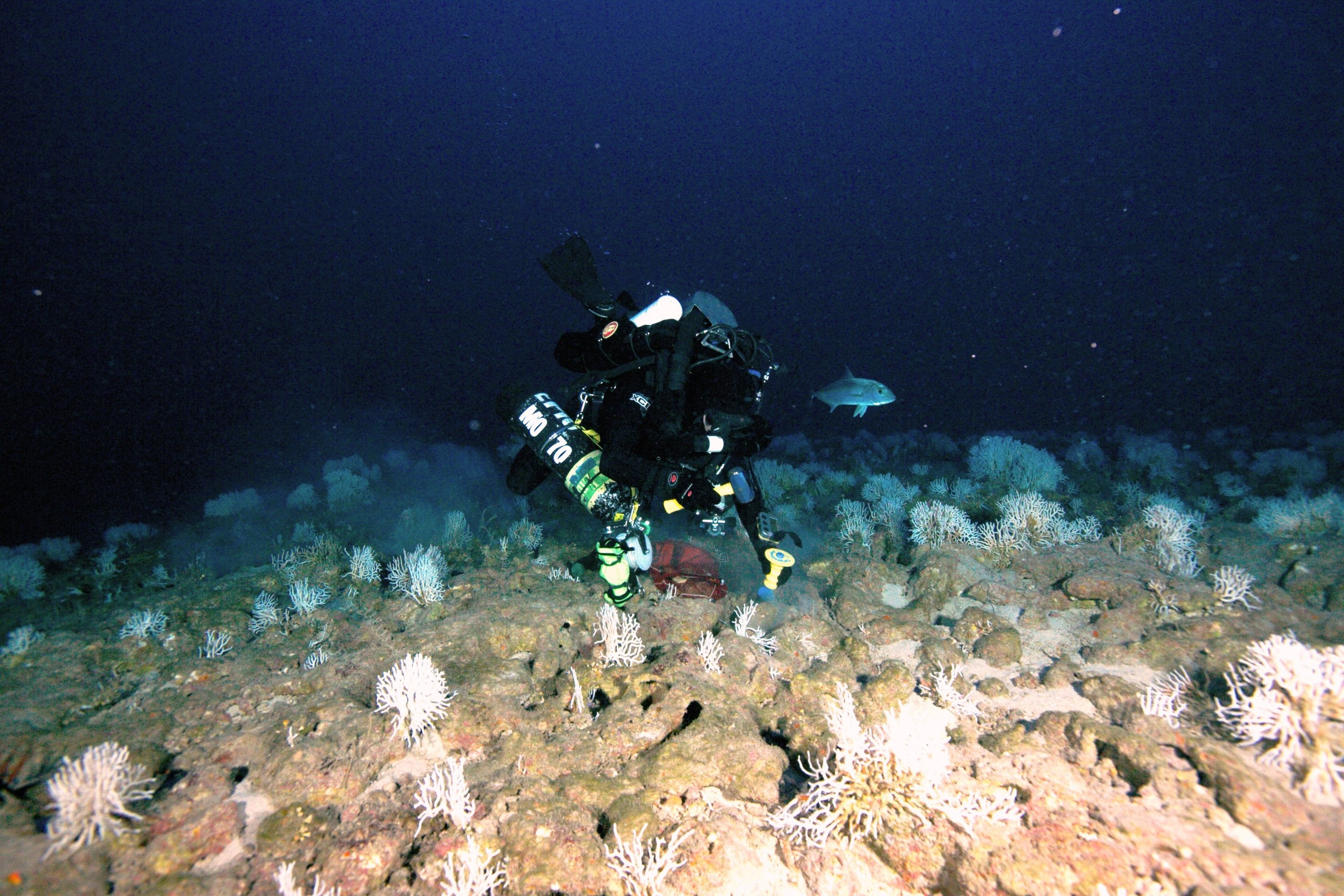did rapid sea level rise drown fossil coral reefs around hawaii