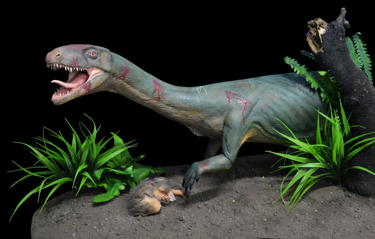Discovery of early, 'croc-like' reptile sheds new light on ...