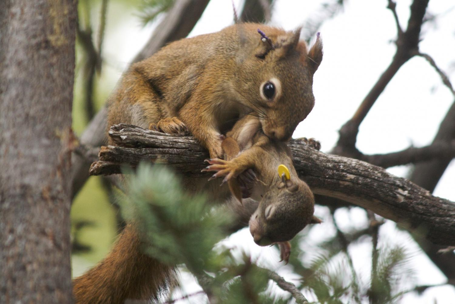 An analysis of squirrel behavior in ecology
