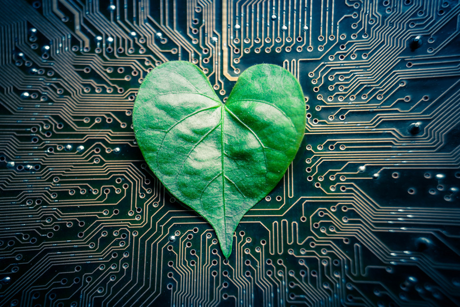 'Tree-on-a-chip' can passively pump water for days