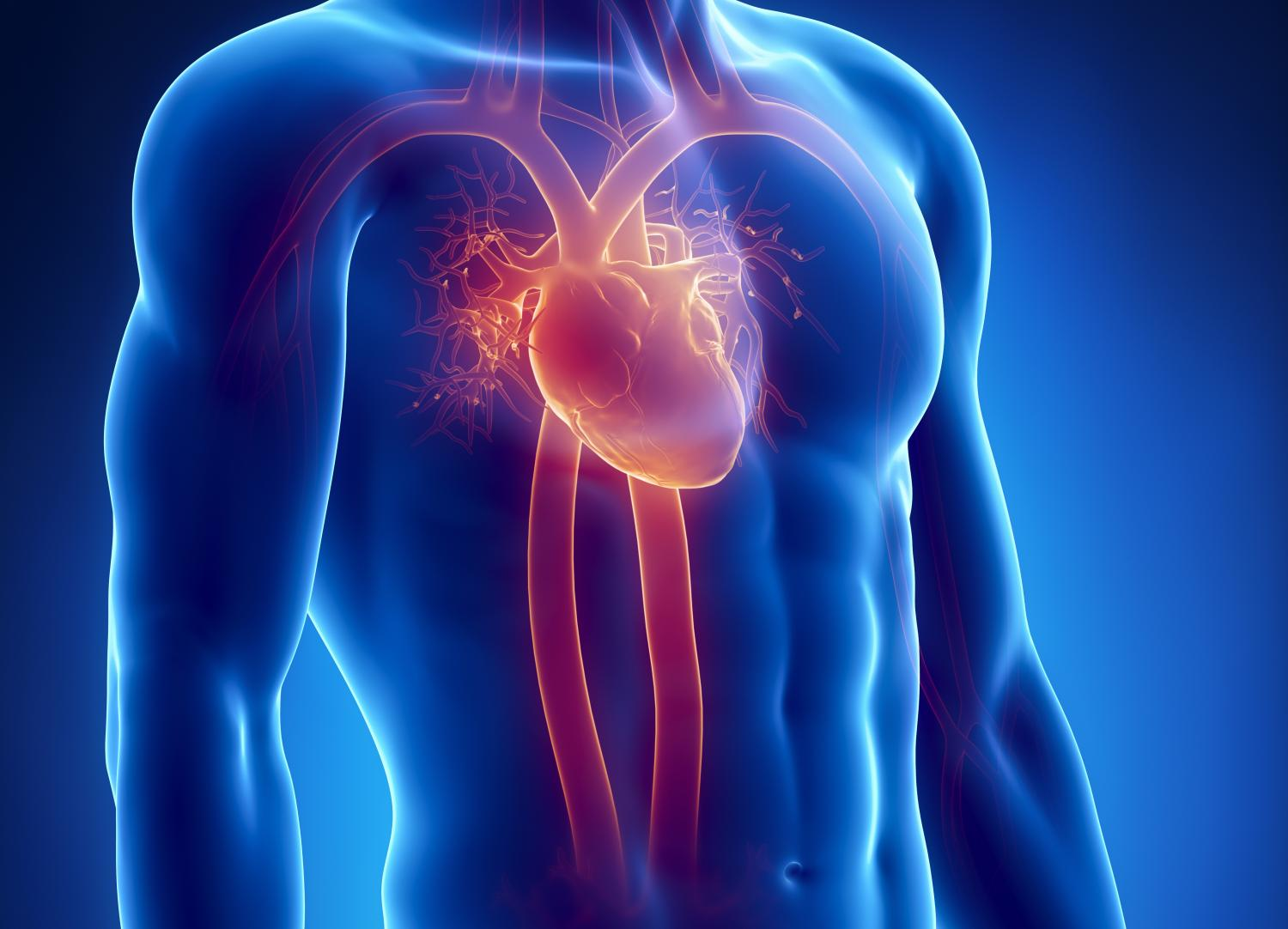heart attack shown to be systemic condition Broken Heart heart attack shown to be systemic condition other ans also affected credit medical university of vienna