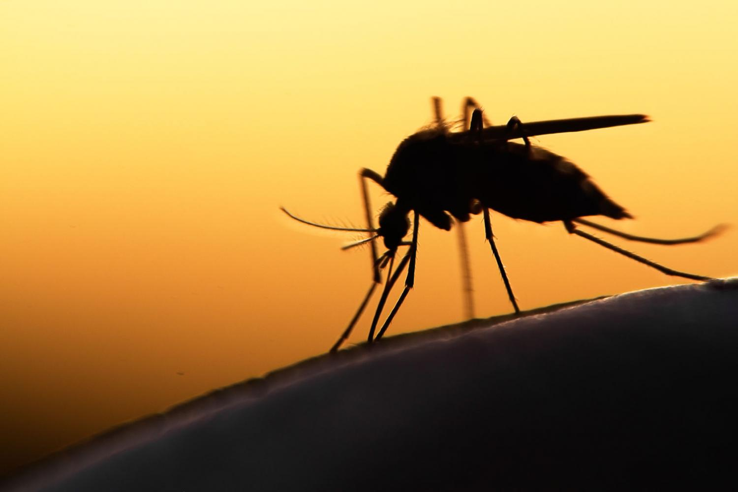 The world's first malaria vaccine is coming to Ghana, Kenya, and Malawi