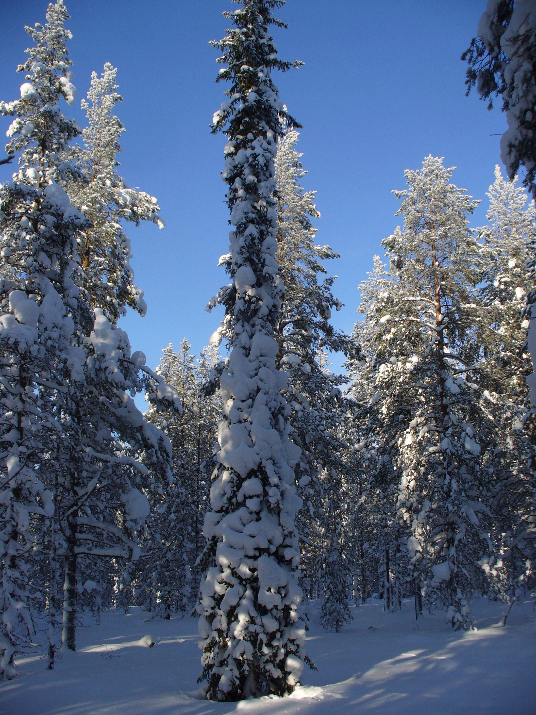 snow aids absorption of carbon dioxide