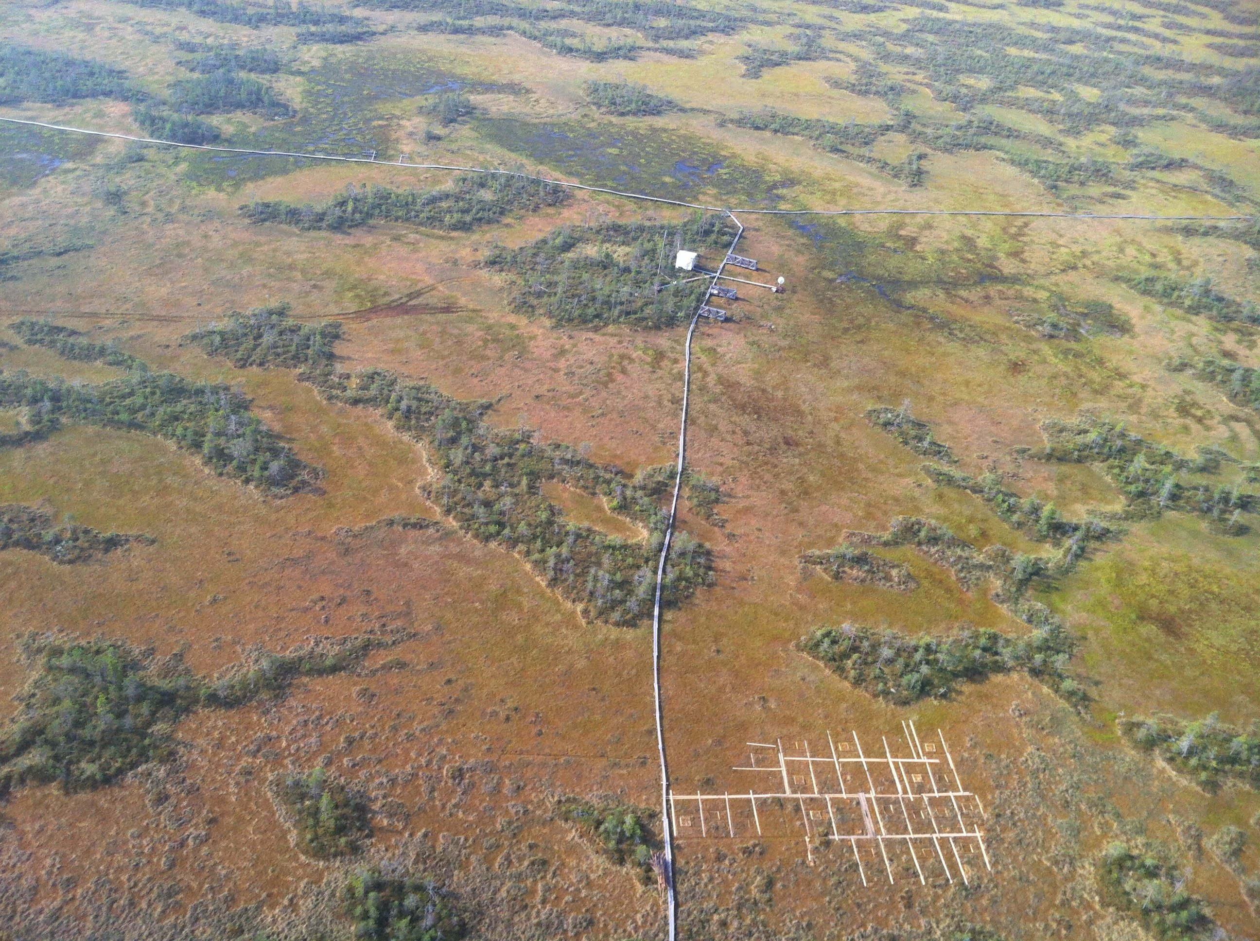 The importance of peat bogs environmental sciences essay
