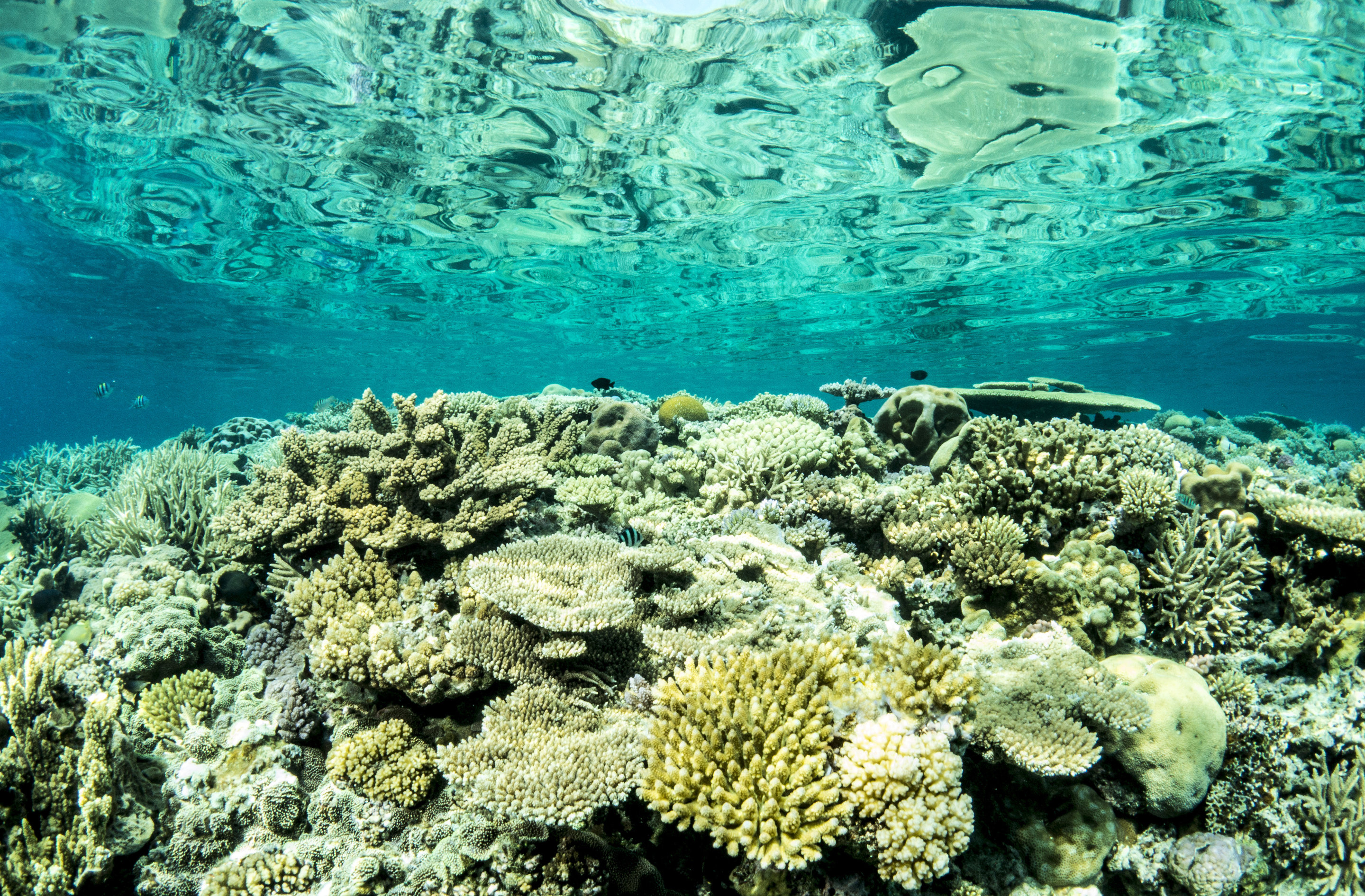 Australia to fund Great Barrier Reef restoration