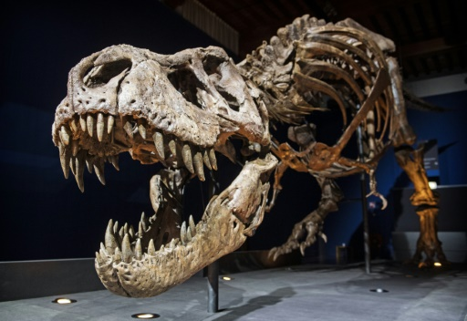 T Rex had scaly skin rather than feathers, claims study