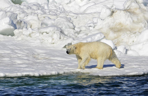 US plan on threatened polar bears lacks teeth critics say