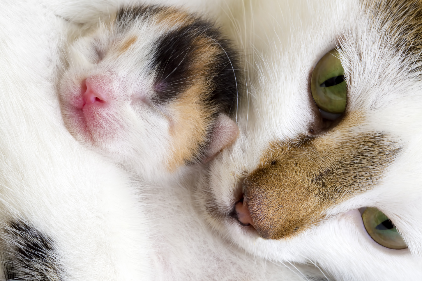 Cant cats resist thinking inside the box kittens get securely snuggled by their mothers credit shutterstock reviewsmspy