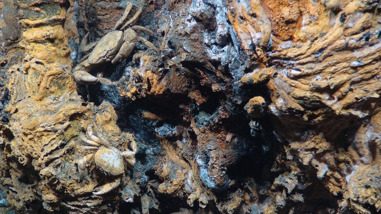 discover hydrothermal vents on deep ocean voyage