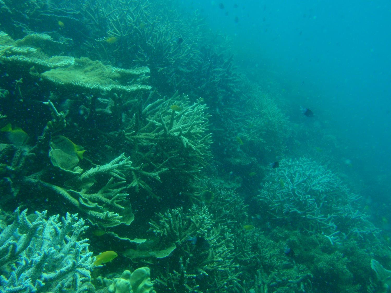 Uranium thorium dating corals for beginners
