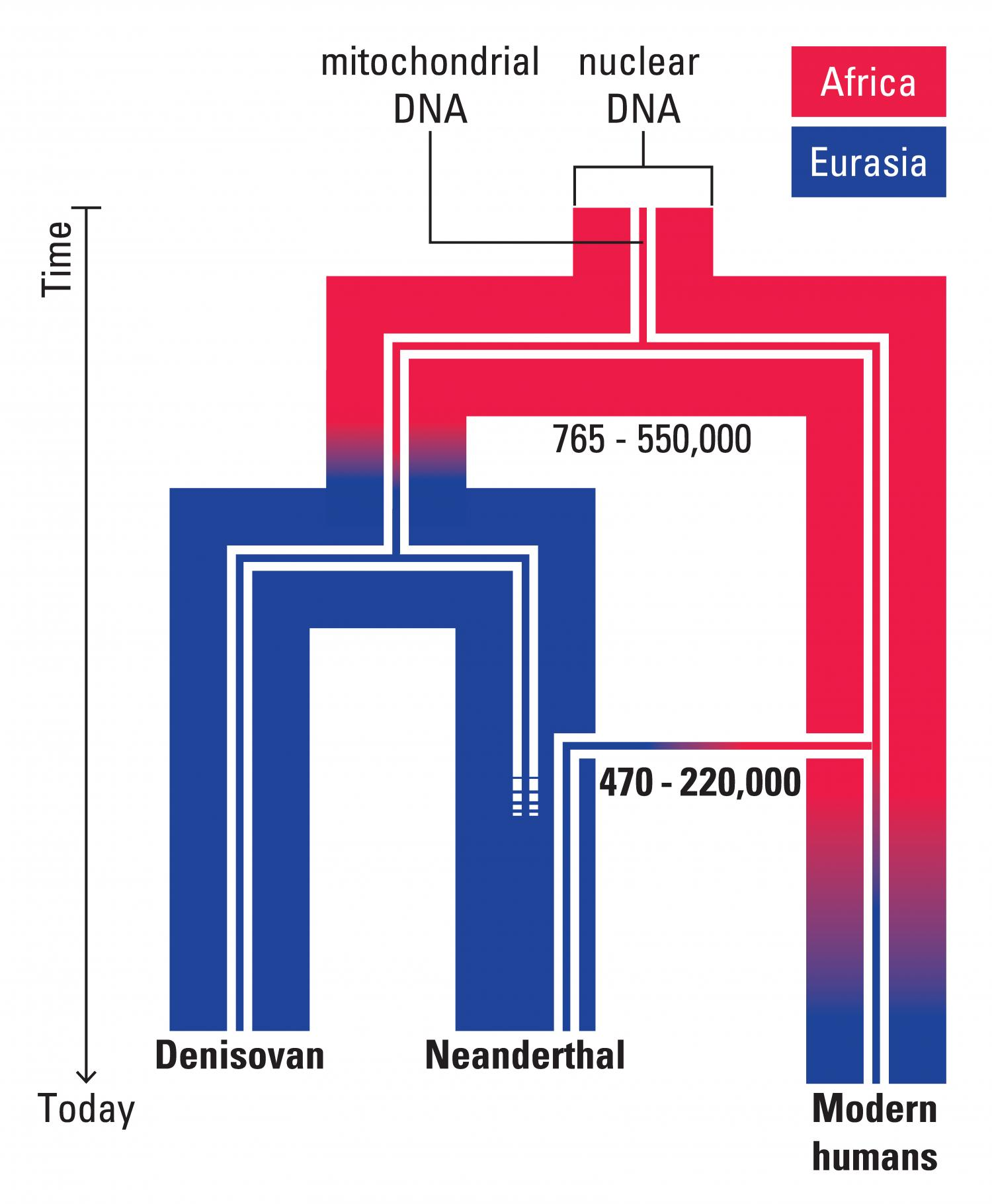 DNA of early Neanderthal gives timeline for new modern human-related dispersal from Africa
