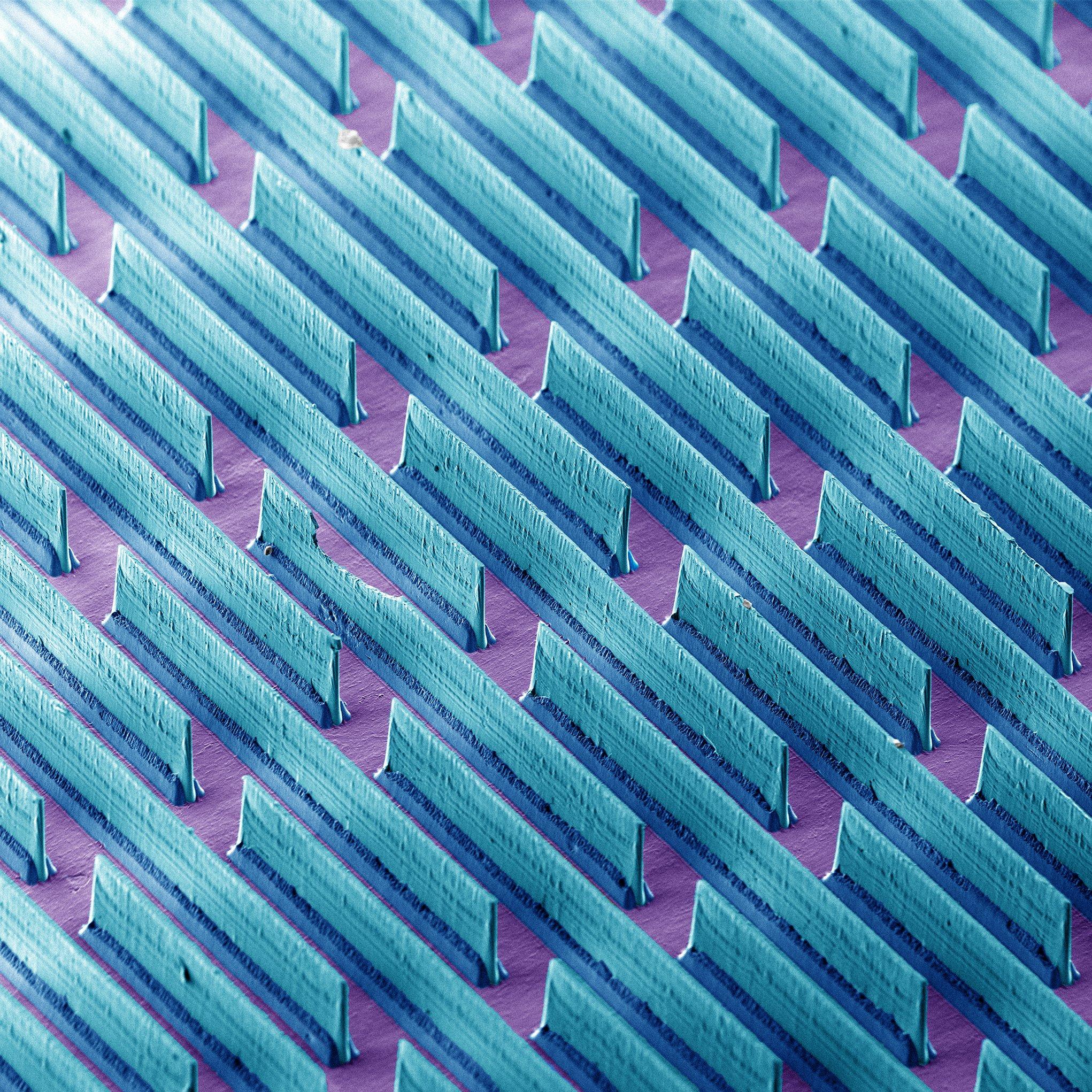 Nesta imagem de microscopia eletrônica, observamos as minúsculas lâminas presentes no adesivo inspirado nas patas de lagartixas proposto por Kang e Varenberg (2017)