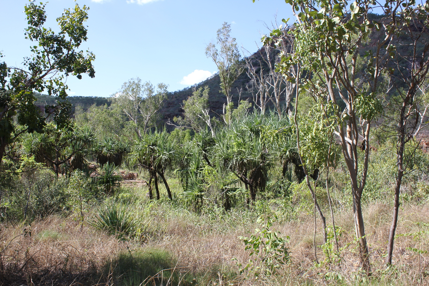 Forests equal to 60pc of Australian landmass discovered using new tool