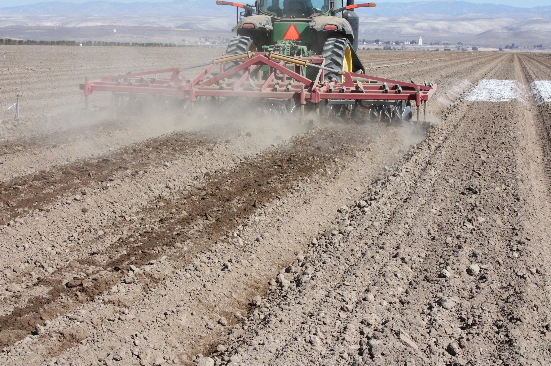 Soil amendments for healthier spinach for Soil amendments