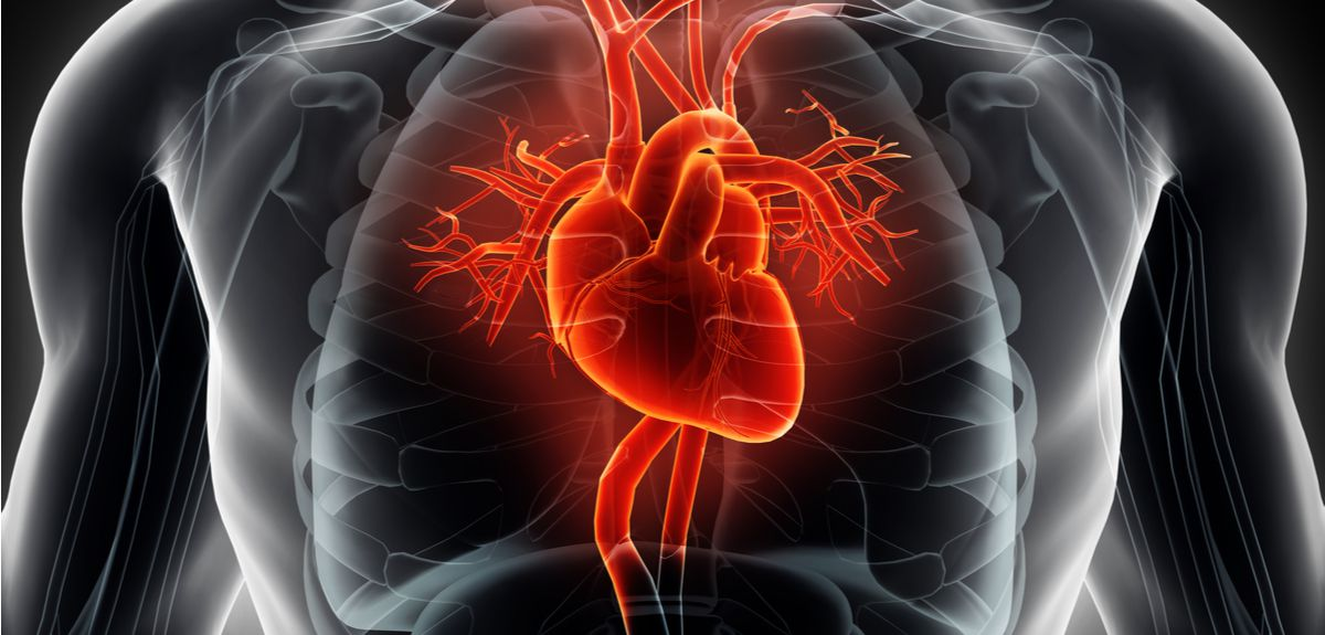 The Neuroscience Behind Stress And >> Mechanism behind sudden cardiac deaths in sports uncovered