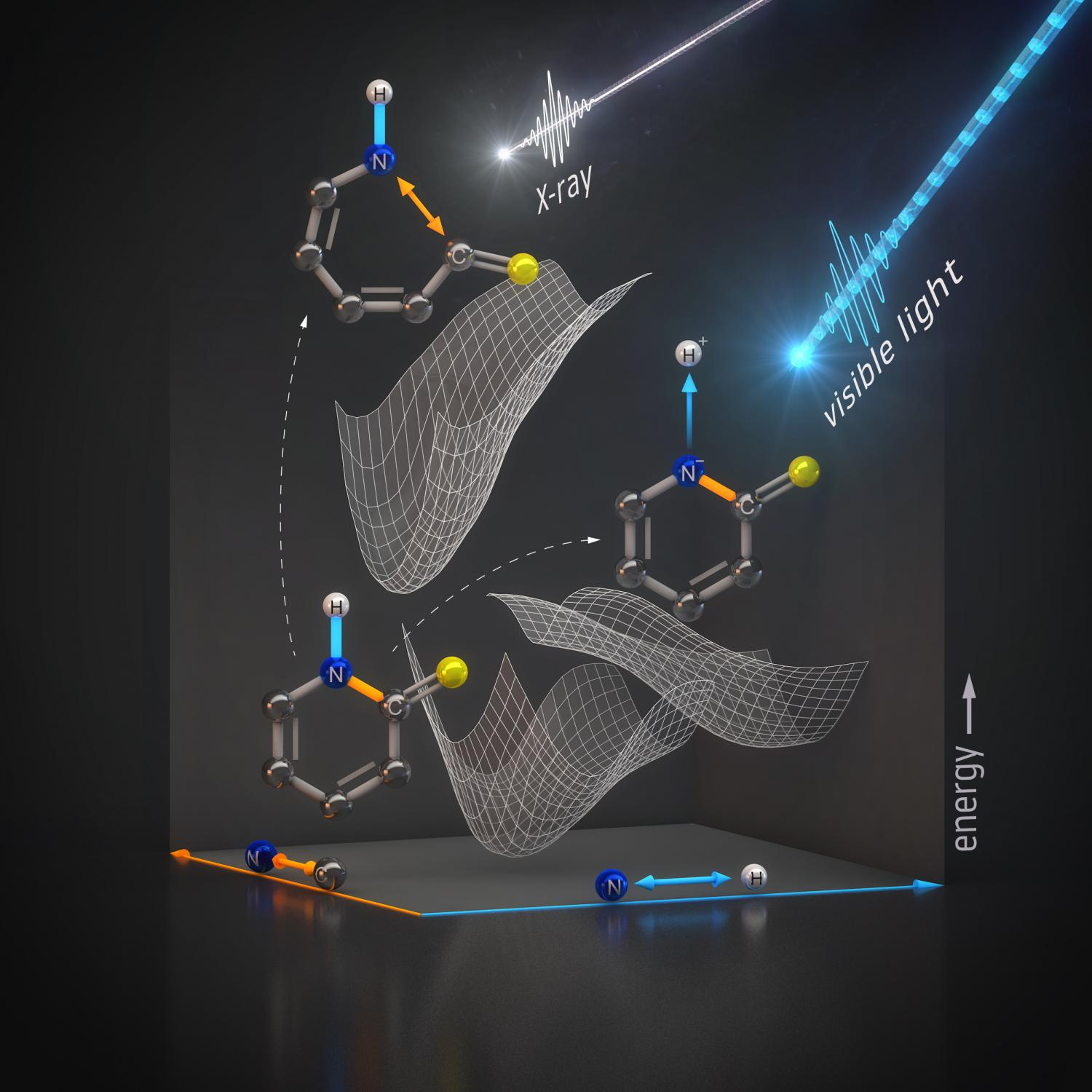 Scientists watch a molecule protect itself from radiation damage