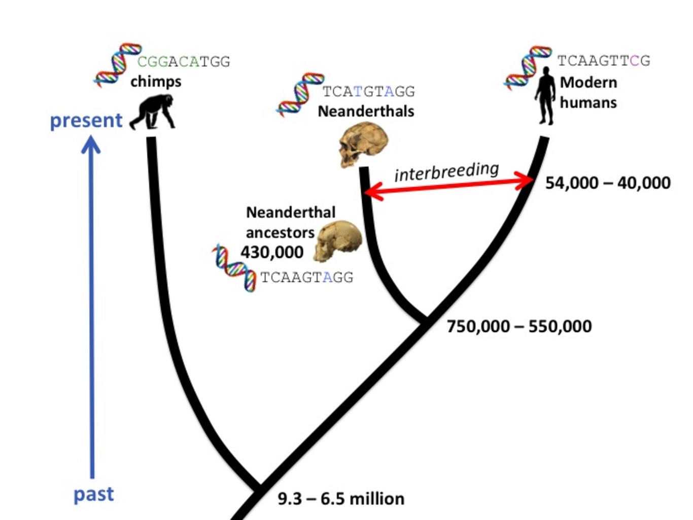 Calculation of the date of birth: how did our ancestors