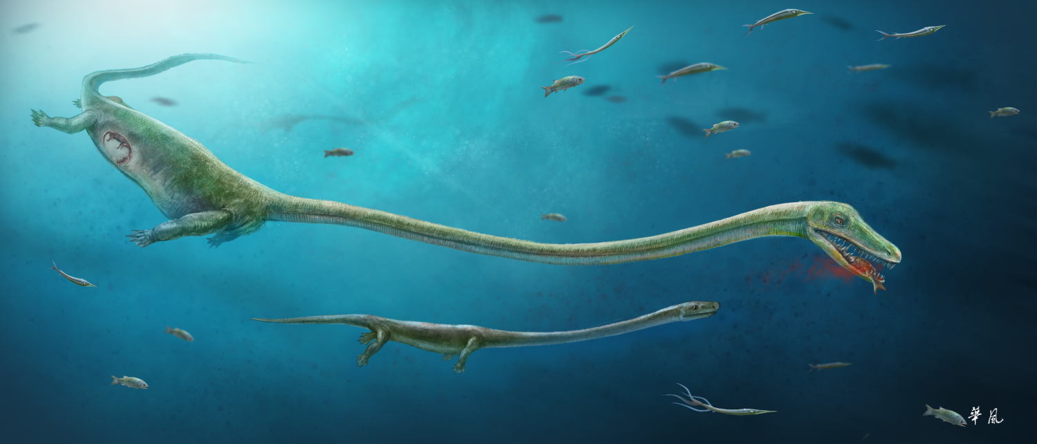 Fossil discovery rewrites understanding of reproductive for How long do fish stay pregnant