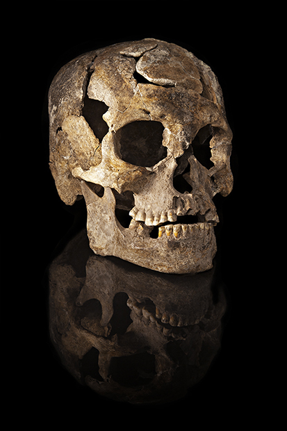 study of ancient skulls suggest there may have been multiple