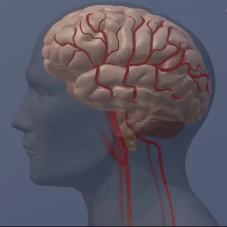 Brain changes linked to physical, mental health in functional